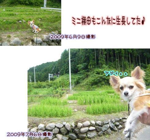 09-07 棚田♪ 3
