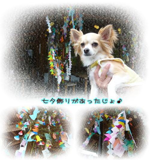 09-07 棚田♪ 4