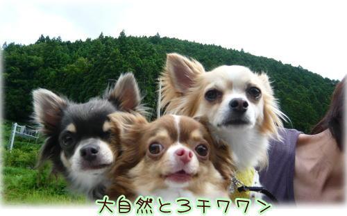 09-07 棚田♪ 5