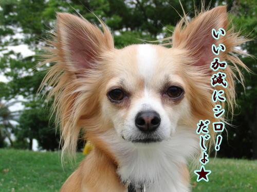 09-07 お菓子待ち 6
