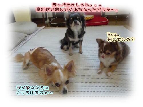 09-09 お休みの日