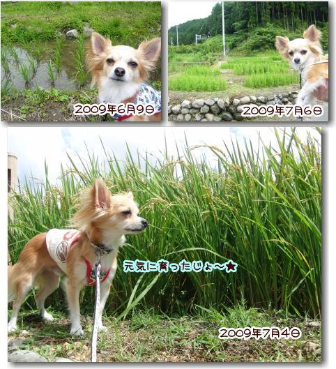 09-09 棚田 3