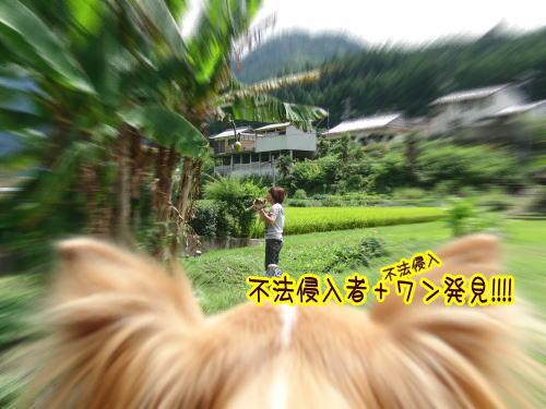 09-09 棚田 7