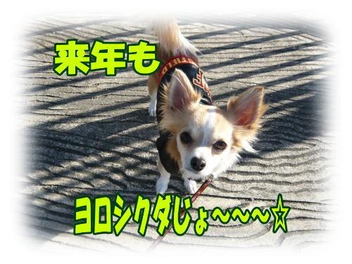 2_20081230110258.jpg