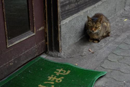 ニューキャッスルの招き猫