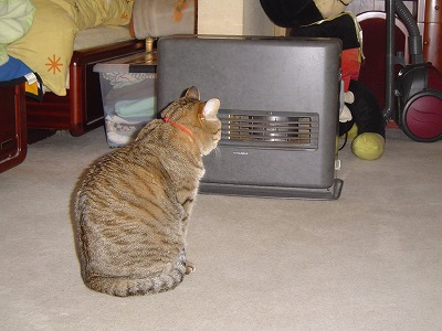 ここは暖かいよ