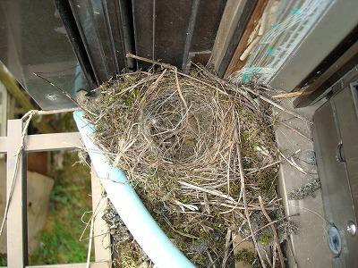 主のいない巣