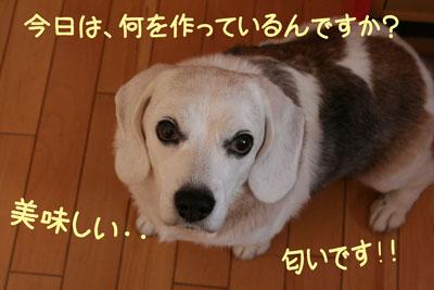 10_20081005152515.jpg