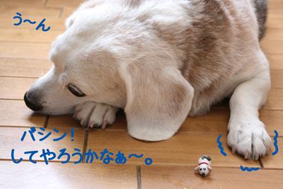 11_20080916214511.jpg