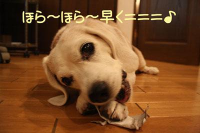 11_20081007165927.jpg