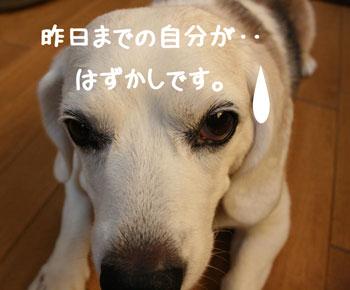 12_20080905151357.jpg