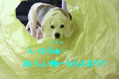 12_20080909150613.jpg