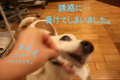 13_20081007165950.jpg