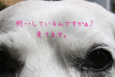 16_20080822143933.jpg