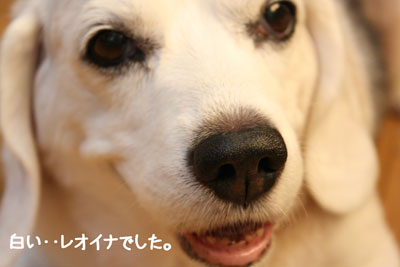16_20080905151457.jpg