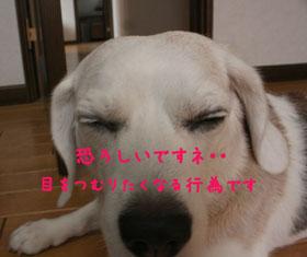 17_20080825114329.jpg