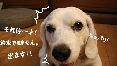 17_20080905152347.jpg