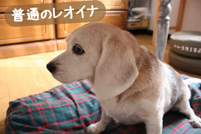 1_20080913162509.jpg