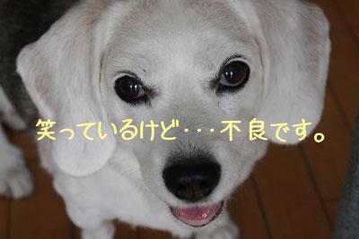 1_20080914152855.jpg