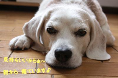 1_20080916112512.jpg