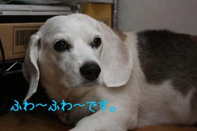 1_20080919132500.jpg