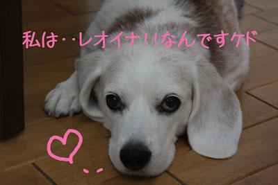 1_20080925113432.jpg