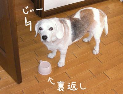 1_20080927014542.jpg
