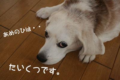 1_20080930120743.jpg