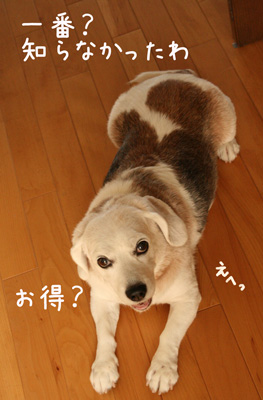 1_20081006135929.jpg