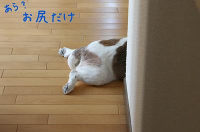 1_20081007005953.jpg