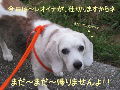 21_20081004200733.jpg