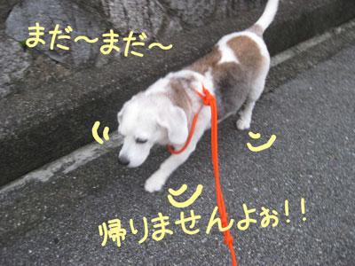22_20081004200743.jpg