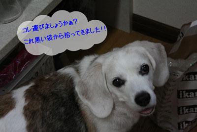 2_20080820110530.jpg