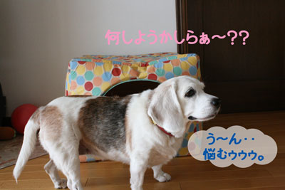 2_20080908130415.jpg