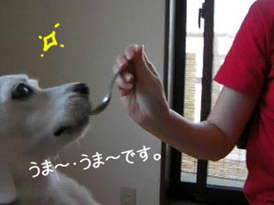2_20080911122348.jpg