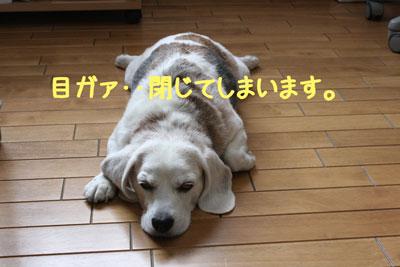 2_20080916112521.jpg