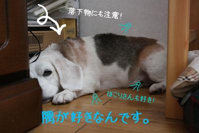 2_20080919132505.jpg