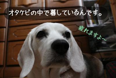 2_20080921153234.jpg