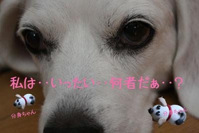 2_20080925113438.jpg