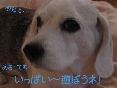 2_20080929130643.jpg