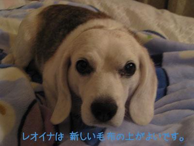 2_20081002011419.jpg