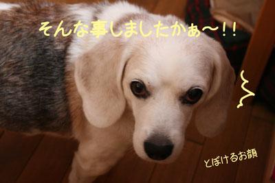 2_20081009233013.jpg