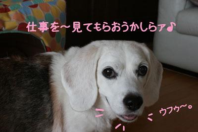 3_20080908130420.jpg