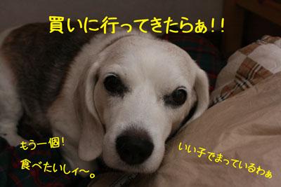 3_20080911122356.jpg