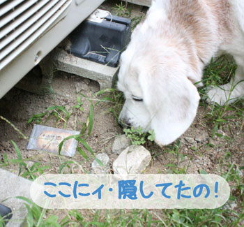 3_20080914152908.jpg