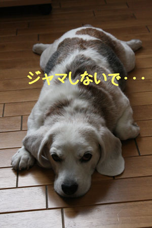 3_20080916112529.jpg