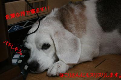 3_20080919132510.jpg