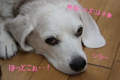 3_20080925113445.jpg