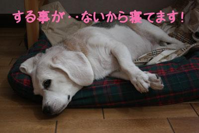 3_20080926221252.jpg