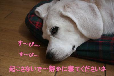 3_20080927233627.jpg